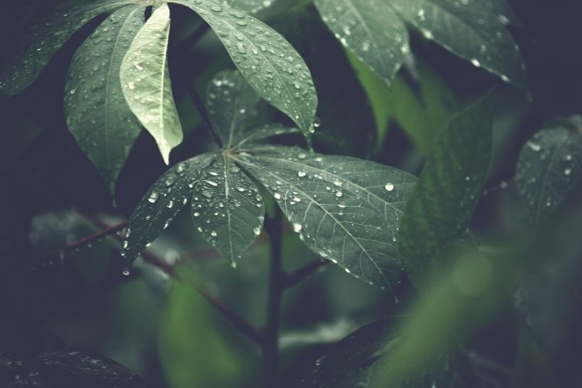Indagamos en el cambio climático con motivo del día internacional de los bosques