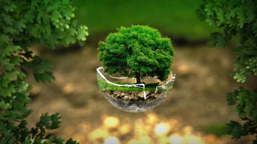 Día Mundial del Medio Ambiente 2021 (Foto de thommas68)