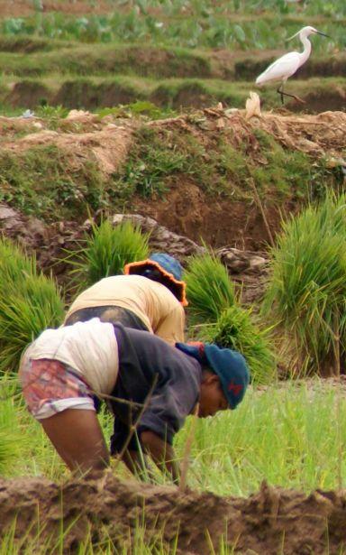 Los campesinos de Madagascar reclaman la tierra de sus ancestros