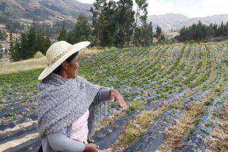 Campo de cultivo en Ckochas. Foto: Manos Unidas / Ana Pérez