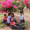 Niños bajo un árbol en Chiapas