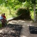 Proyecto Caritas Les Cayes, Haiti