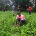 Senegal - Conveni Mans Unides AECID - Foto Adele Lassalas - Reforestació en bosc comunitari