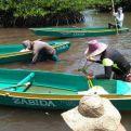 Miembros de la comunidad de Simariki plantando manglares