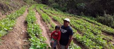 Avançar en la sostenibilitat agroalimentària en comunitats Lenques (Hondures)
