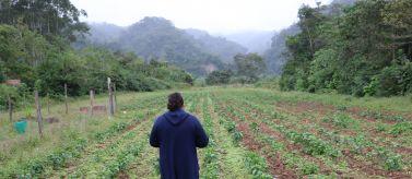 Mejora de la seguridad alimentaria y aumento de los ingresos
