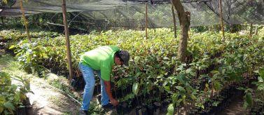 Promoción de redes de conocimiento y acciones de desarrollo sostenible ante el cambio climático, en comunidades rurales del municipio de Choloma, Honduras. Foto: Manos Unidas