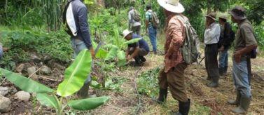 Pequeños productores Tamanique