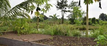 Campos de Siem Reap. Foto: Manos Unidas / Patricia Garrido