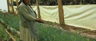 Mujer agrícola de Bolivia