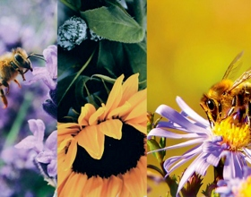 Una vetlla de pregària per la biodiversitat com a benedicció de Déu