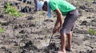 Plantada de manglar en Filipinas